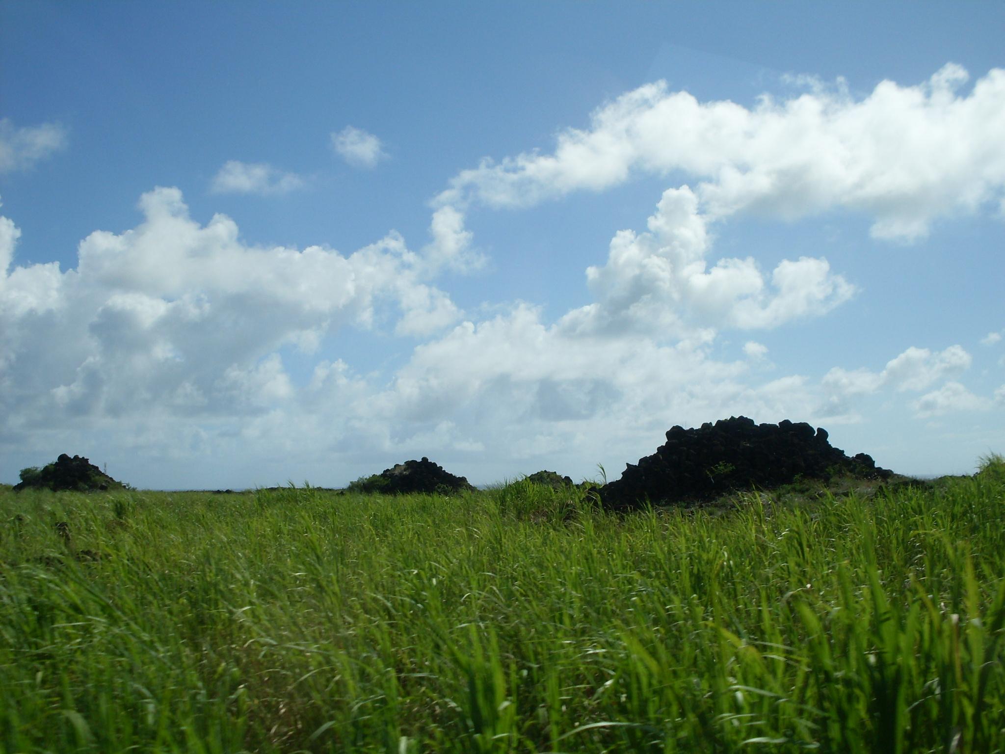 Mauritius 100