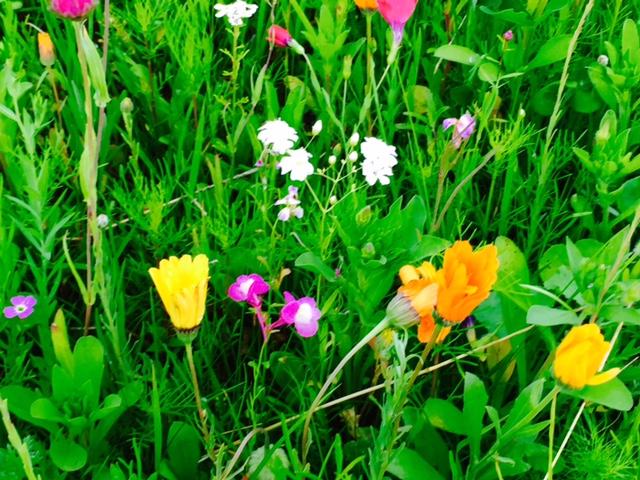 vadvirágok