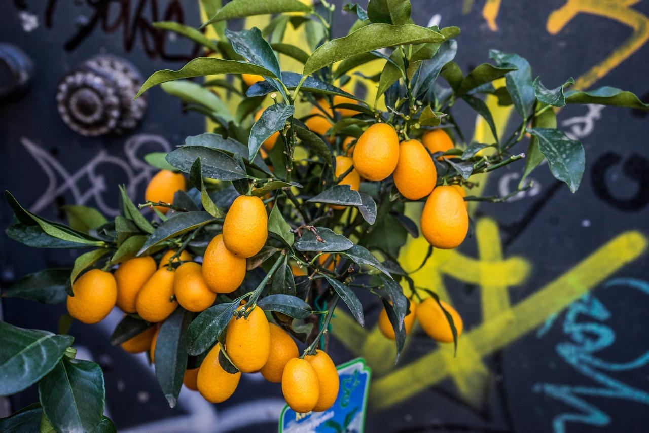 citrusok nevelése